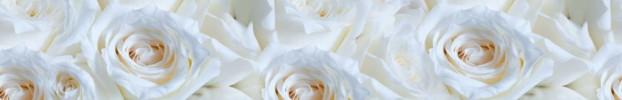 170320209 кухонный фартук Скинали Цветы, фартук для кухни Скинали Цветы, стеклянный фартук Скинали Цветы, фартук на кухню Скинали Цветы