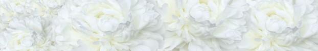 230720211 кухонный фартук Скинали Цветы, фартук для кухни Скинали Цветы, стеклянный фартук Скинали Цветы, фартук на кухню Скинали Цветы