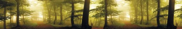 220720219 кухонный фартук Скинали Лес, фартук для кухни Скинали Лес, стеклянный фартук Скинали Лес, фартук на кухню Скинали Лес