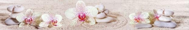 1507202014 кухонный фартук Скинали Орхидеи, фартук для кухни Скинали Орхидеи, стеклянный фартук Скинали Орхидеи, фартук на кухню Скинали Орхидеи