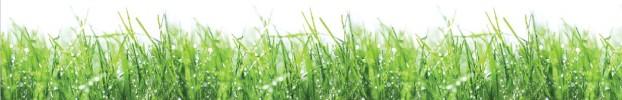 090720215 кухонний фартухСкіналі трава, фартух для кухніСкіналі трава, скляний фартухСкіналі трава, фартух на кухнюСкіналі трава