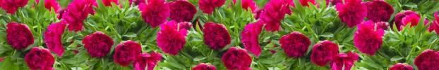 220720214 кухонный фартук Скинали Цветы, фартук для кухни Скинали Цветы, стеклянный фартук Скинали Цветы, фартук на кухню Скинали Цветы