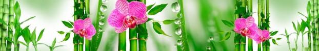 291020198 кухонний фартухСкіналі: Орхідеї, фартух для кухніСкіналі: Орхідеї, скляний фартухСкіналі: Орхідеї, фартух на кухнюСкіналі: Орхідеї