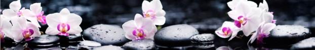 7741 кухонный фартук Скинали Орхидеи, фартук для кухни Скинали Орхидеи, стеклянный фартук Скинали Орхидеи, фартук на кухню Скинали Орхидеи