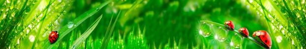 2075 кухонний фартухСкіналі трава, фартух для кухніСкіналі трава, скляний фартухСкіналі трава, фартух на кухнюСкіналі трава