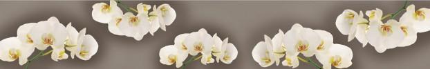 1504202010 кухонный фартук Скинали Орхидеи, фартук для кухни Скинали Орхидеи, стеклянный фартук Скинали Орхидеи, фартук на кухню Скинали Орхидеи