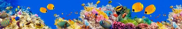 6216 кухонный фартук Скинали: Море, фартук для кухни Скинали: Море, стеклянный фартук Скинали: Море, фартук на кухню Скинали: Море