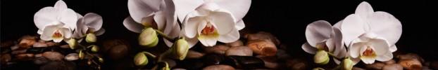 01032020 кухонный фартук Скинали Орхидеи, фартук для кухни Скинали Орхидеи, стеклянный фартук Скинали Орхидеи, фартук на кухню Скинали Орхидеи