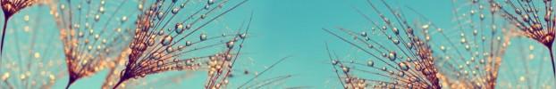 131020202 кухонний фартухСкіналі: Кульбаби, фартух для кухніСкіналі: Кульбаби, скляний фартухСкіналі: Кульбаби, фартух на кухнюСкіналі: Кульбаби
