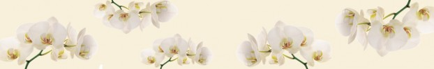 1310202013 кухонный фартук Скинали Орхидеи, фартук для кухни Скинали Орхидеи, стеклянный фартук Скинали Орхидеи, фартук на кухню Скинали Орхидеи