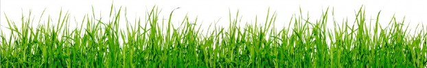 2810201912 кухонний фартухСкіналі трава, фартух для кухніСкіналі трава, скляний фартухСкіналі трава, фартух на кухнюСкіналі трава