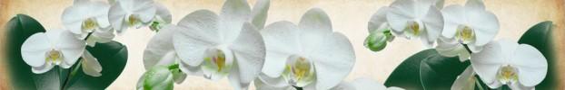281020203 кухонный фартук Скинали Орхидеи, фартук для кухни Скинали Орхидеи, стеклянный фартук Скинали Орхидеи, фартук на кухню Скинали Орхидеи