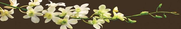 070720216 кухонный фартук Скинали Орхидеи, фартук для кухни Скинали Орхидеи, стеклянный фартук Скинали Орхидеи, фартук на кухню Скинали Орхидеи