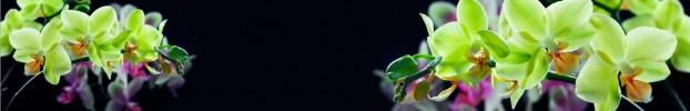 61120202 кухонный фартук Скинали Орхидеи, фартук для кухни Скинали Орхидеи, стеклянный фартук Скинали Орхидеи, фартук на кухню Скинали Орхидеи