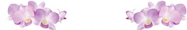 0907202133 кухонный фартук Скинали Орхидеи, фартук для кухни Скинали Орхидеи, стеклянный фартук Скинали Орхидеи, фартук на кухню Скинали Орхидеи