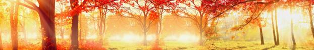 18570 кухонний фартухСкіналі під дерево, фартух для кухніСкіналі під дерево, скляний фартухСкіналі під дерево, фартух на кухнюСкіналі під дерево