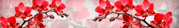 281020204 кухонный фартук Скинали Орхидеи, фартук для кухни Скинали Орхидеи, стеклянный фартук Скинали Орхидеи, фартук на кухню Скинали Орхидеи