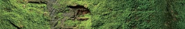 16072021 кухонний фартухСкіналі: Природа, фартух для кухніСкіналі: Природа, скляний фартухСкіналі: Природа, фартух на кухнюСкіналі: Природа