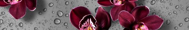 2551 кухонний фартухСкіналі: Орхідеї, фартух для кухніСкіналі: Орхідеї, скляний фартухСкіналі: Орхідеї, фартух на кухнюСкіналі: Орхідеї