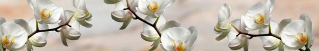 4211 кухонный фартук Скинали Орхидеи, фартук для кухни Скинали Орхидеи, стеклянный фартук Скинали Орхидеи, фартук на кухню Скинали Орхидеи