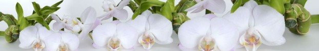 3837 кухонный фартук Скинали Орхидеи, фартук для кухни Скинали Орхидеи, стеклянный фартук Скинали Орхидеи, фартук на кухню Скинали Орхидеи