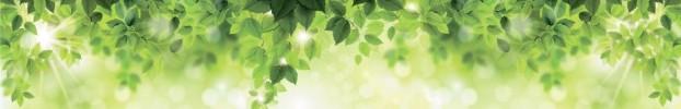 0907202142 кухонний фартухСкіналі: Природа, фартух для кухніСкіналі: Природа, скляний фартухСкіналі: Природа, фартух на кухнюСкіналі: Природа