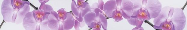 231020206 кухонный фартук Скинали Орхидеи, фартук для кухни Скинали Орхидеи, стеклянный фартук Скинали Орхидеи, фартук на кухню Скинали Орхидеи
