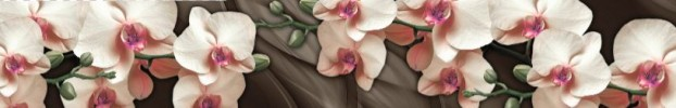 1603202115 кухонный фартук Скинали Орхидеи, фартук для кухни Скинали Орхидеи, стеклянный фартук Скинали Орхидеи, фартук на кухню Скинали Орхидеи