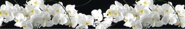 532034452 кухонный фартук Скинали Орхидеи, фартук для кухни Скинали Орхидеи, стеклянный фартук Скинали Орхидеи, фартук на кухню Скинали Орхидеи