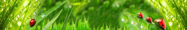 1504202020 кухонний фартухСкіналі трава, фартух для кухніСкіналі трава, скляний фартухСкіналі трава, фартух на кухнюСкіналі трава