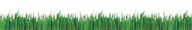 27042020 кухонний фартухСкіналі трава, фартух для кухніСкіналі трава, скляний фартухСкіналі трава, фартух на кухнюСкіналі трава