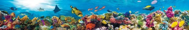 16093 кухонный фартук Скинали аквариум, фартук для кухни Скинали аквариум, стеклянный фартук Скинали аквариум, фартук на кухню Скинали аквариум