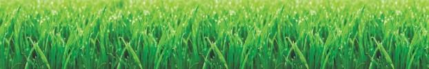 070720205 кухонний фартухСкіналі трава, фартух для кухніСкіналі трава, скляний фартухСкіналі трава, фартух на кухнюСкіналі трава
