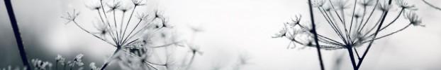 24186 кухонний фартухСкіналі: Кульбаби, фартух для кухніСкіналі: Кульбаби, скляний фартухСкіналі: Кульбаби, фартух на кухнюСкіналі: Кульбаби